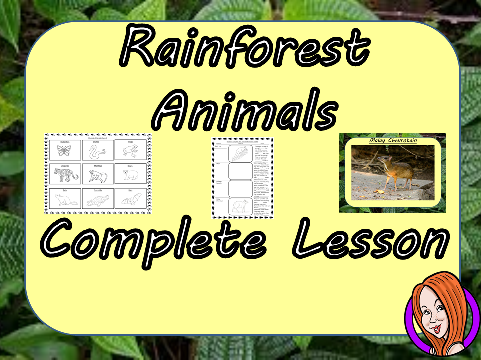 Identifying Rainforest Animals  -  Complete STEAM Lesson