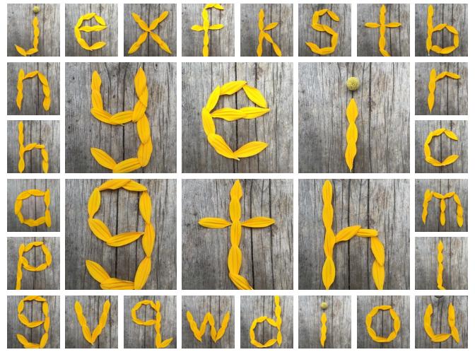 Sunflower nature alphabet