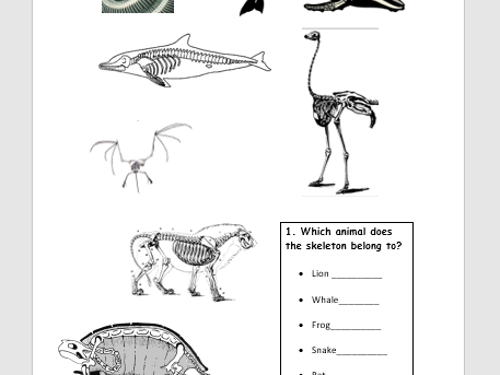 Introduction to Skeletons (humans and animals)
