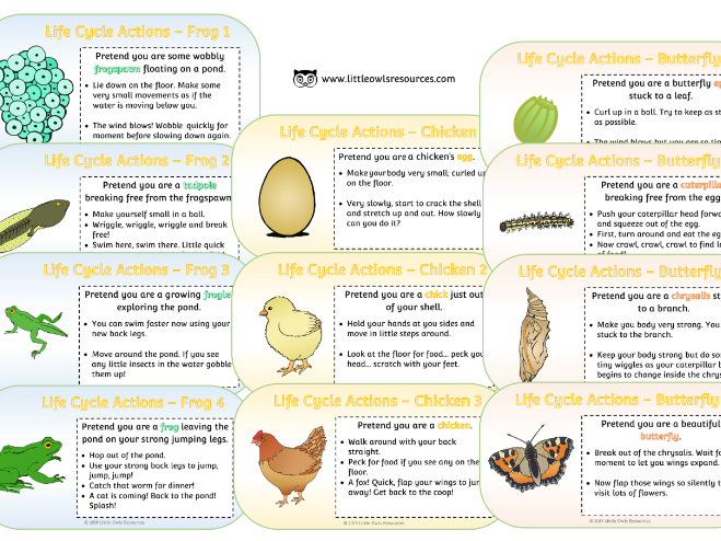 Life Cycle Movement/Action Cards