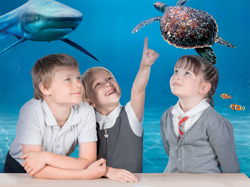 The Natural World (Ages 7-11) - a SEA LIFE London resource