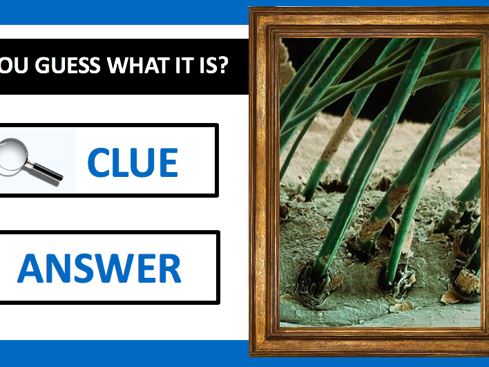KS3 / KS4 - What is under the microscope? -  Powerpoint Activity