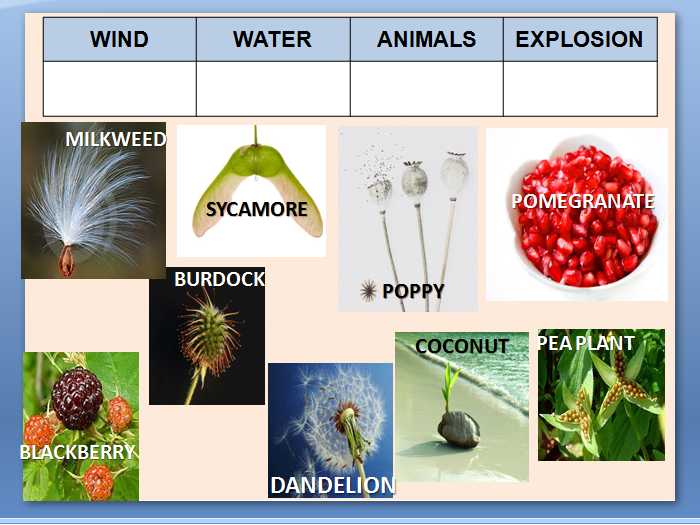 Plant Seed Dispersal