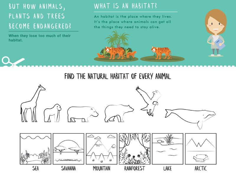 Teach about endangered species with fun and design illustrations worksheets. Introduction and Bees.