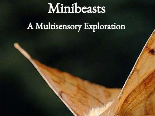Minibeasts - A Multisensory Exploration