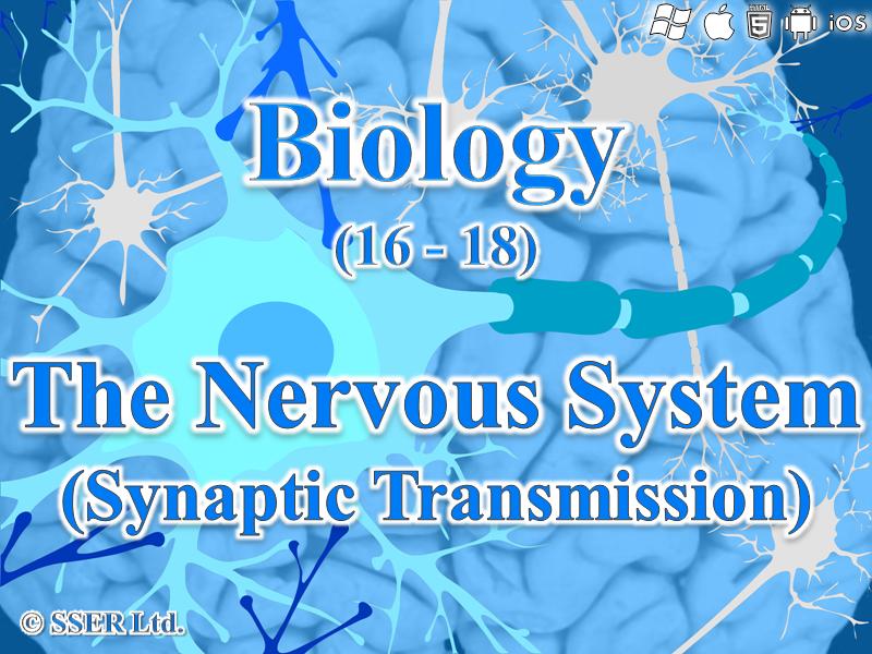 3.6.2.2 Synaptic Transmission