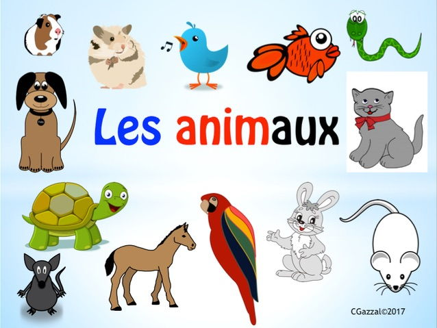 Pets in French.