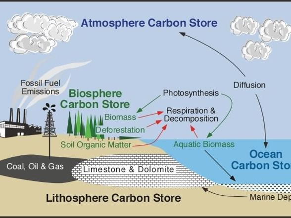 L10 – Water and Carbon Cycles, The Movement of Carbon AQA A Level 2018