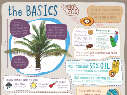 Learn at Chester Zoo - Palm Oil - The Basics