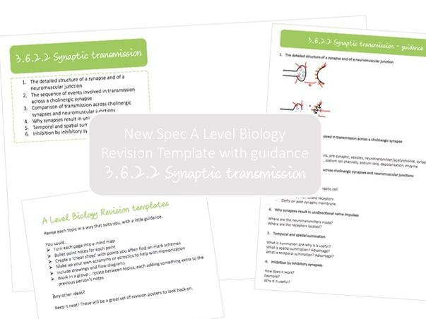 NEW A Level Biology revision template with guidance | 3.6.2.2 Synaptic transmission