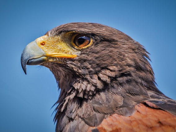 Hawk Roosting Lesson Complete - Language Analysis - Conflict Cluster - Unseen Poetry