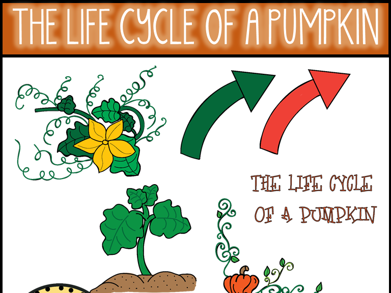 The Life Cycle of a Pumpkin Clip Art