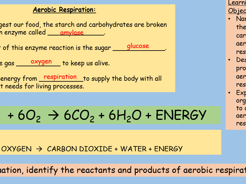 Aerobic Respiration GCSE Full Lesson