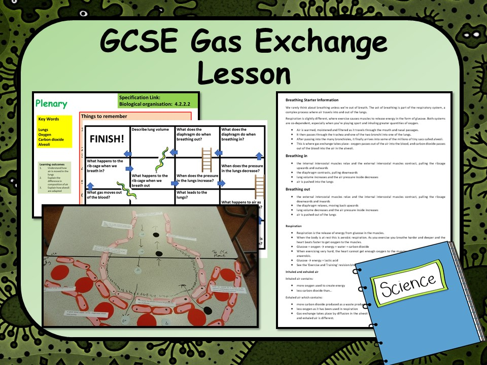 New KS4 GCSE Biology (Science) Gas Movement in the Alveoli Lesson