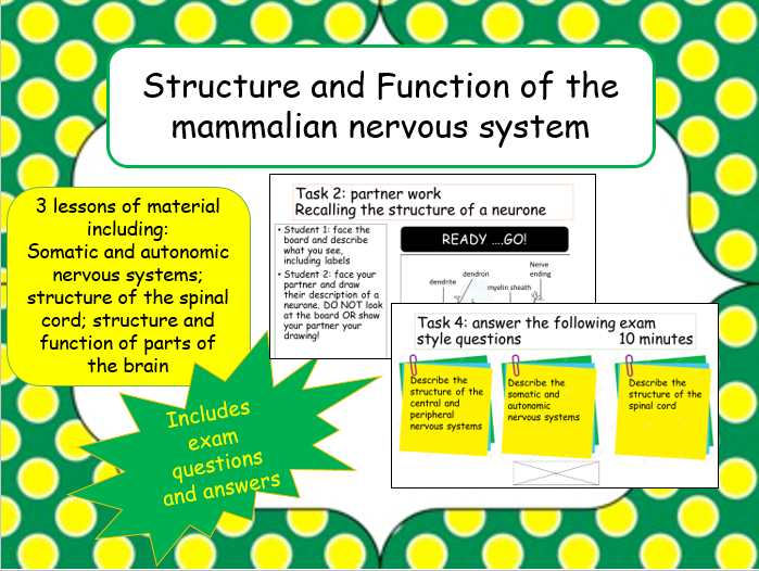 A2 Structure and Function of the Mammalian Nervous System (3 lessons)