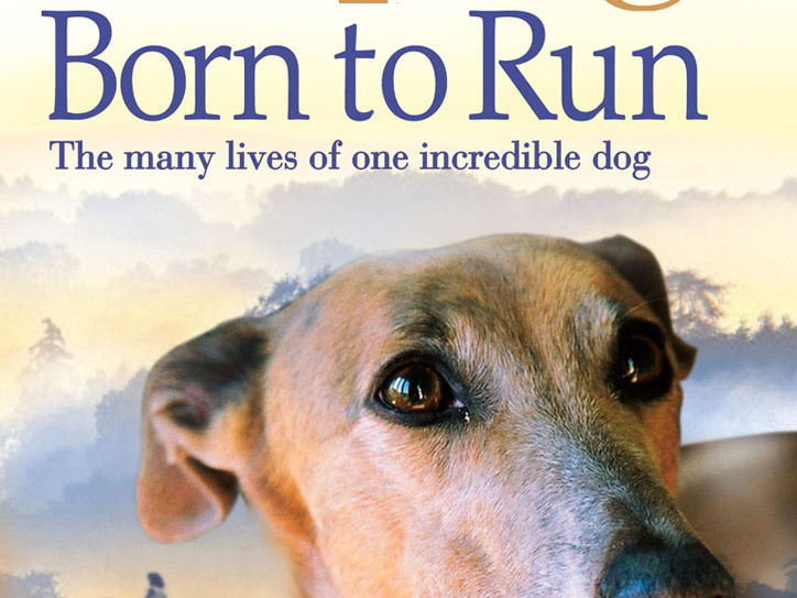 Born to Run by Michael Morpurgo: Guided Reading Plans and Independent Learning Contracts