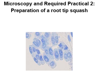 AQA Required Practical 2-Root tip squash