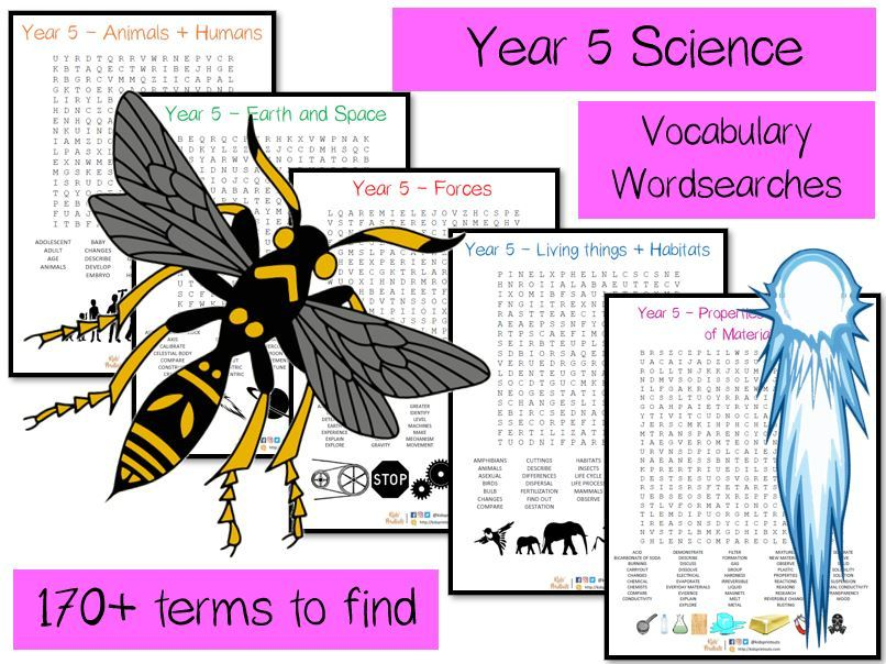 Year 5 Science vocabulary word searches x 5 - over 170 terms