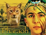 Pharaoh mixed up sentences