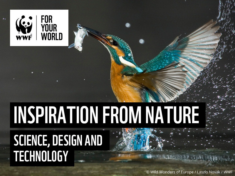 Learn from Nature: An Introduction to Biomimicry - KS2 D&T