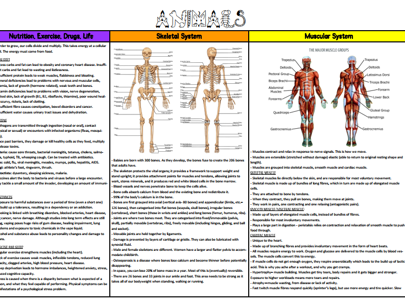 Science Knowledge Organiser - Animals Including Humans