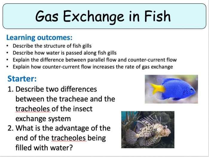 NEW (2016) AQA AS Biology – Gas Exchange in Fish