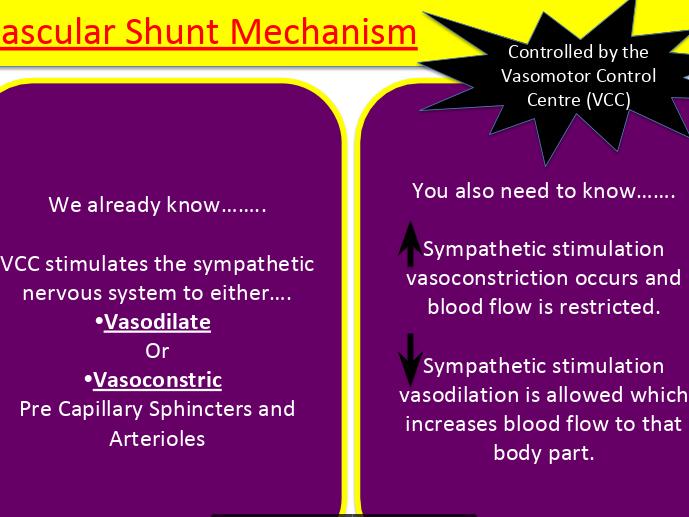 OCR A Level PE: Cardiovascular system