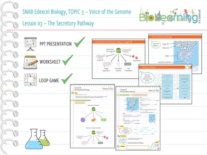 SNAB Biology Topic 3 -  Lesson 03 (Secretory Pathway) - WS, PPT and Loop Game