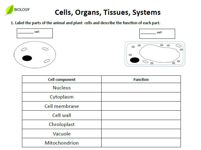 Cells, Organs, Tissues, Systems homework sheet