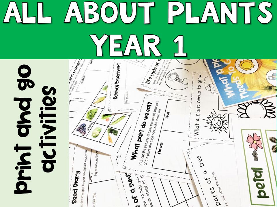 Plants Year 1