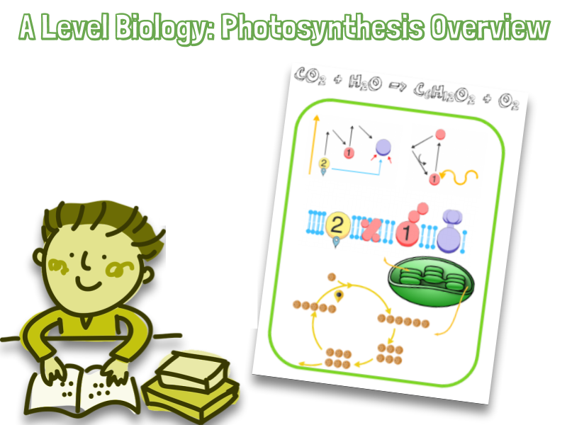 Photosynthesis A Level Biology  A3 Overview revision diagram