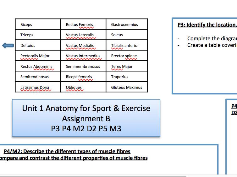 QCF BTEC Level 3 Sport/& Exercise Science Unit 1: Assignment B P3 P4 P5 M2 M3 D2