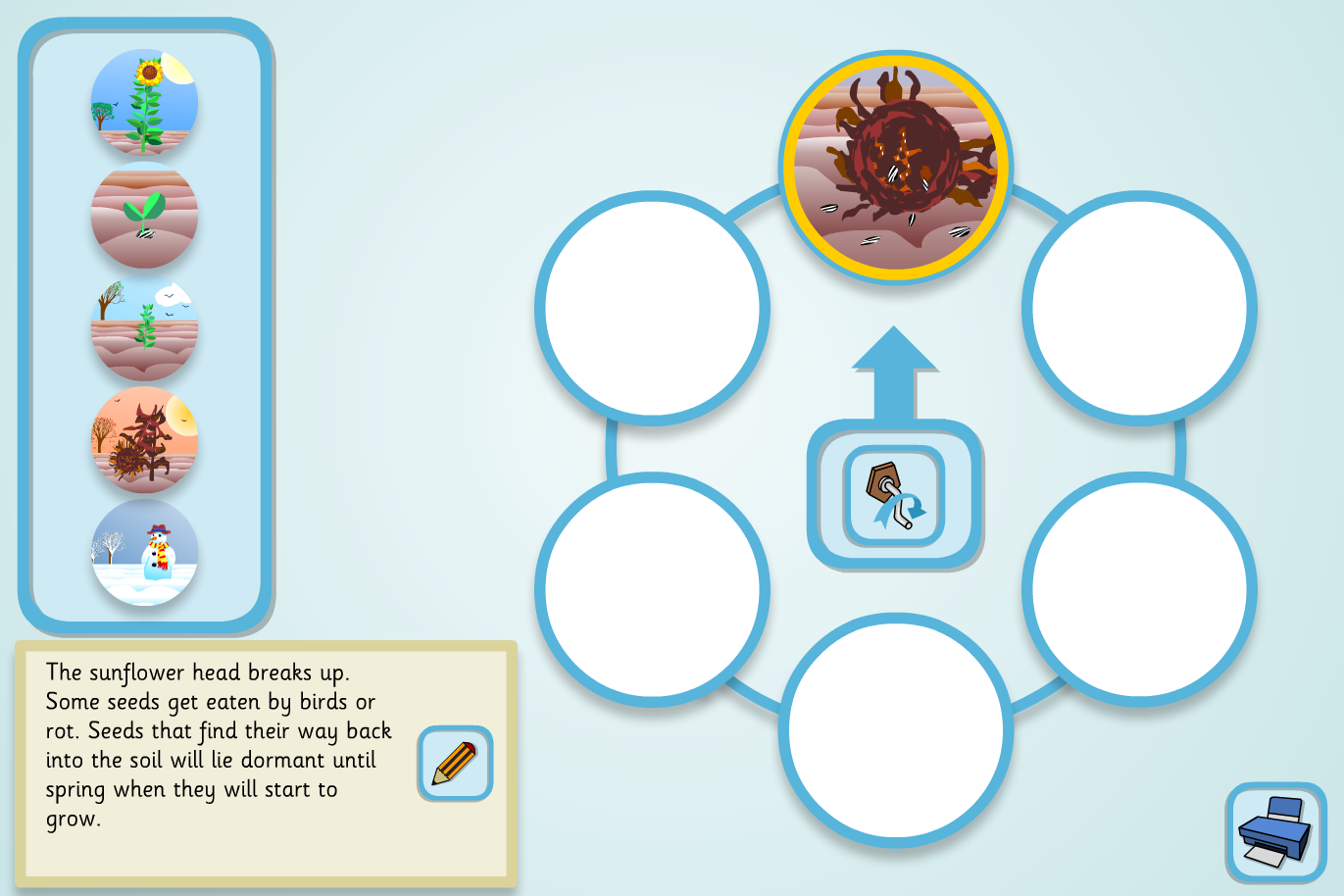 Sunflower Lifecycle Sequencer (Complex) - KS2 Literacy