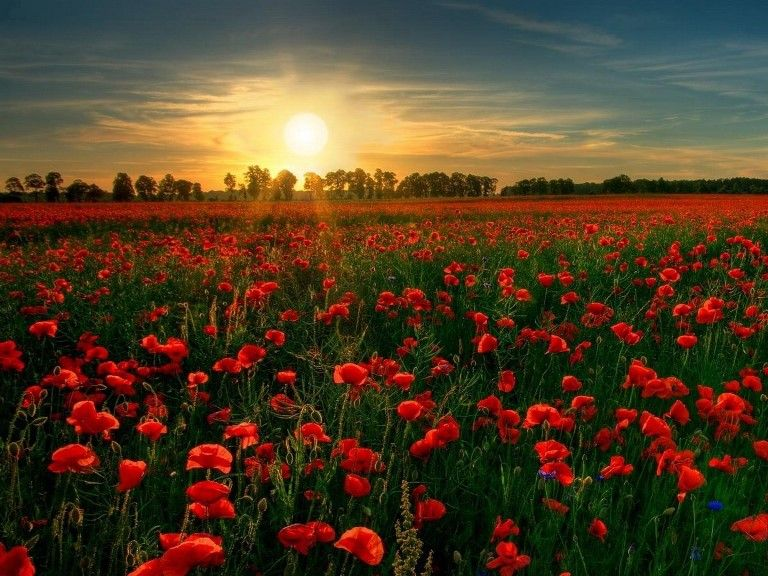 Power and Conflict - Poppies - 9-1