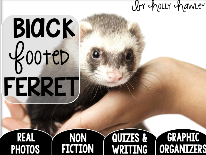 Black Footed Ferret-A Research Project- US and UK Version COMBO