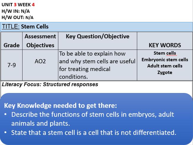 B2.3 Stem Cells
