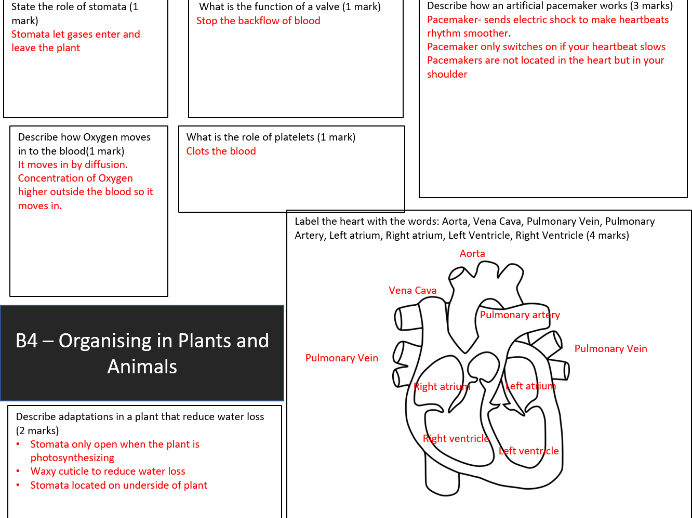 AQA GCSE 9-1 B4 Organisation in Plants and Animals Revision Mat