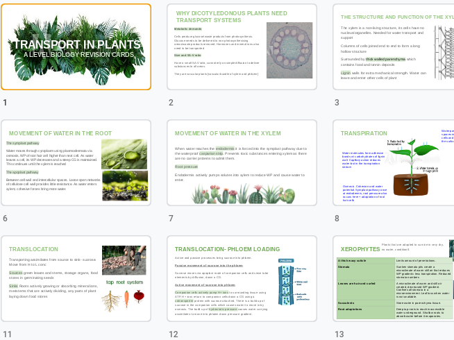 Transport in plants revision cards