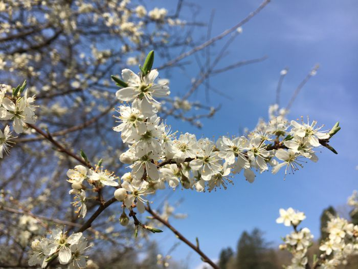 Spring Blossom: Seasons
