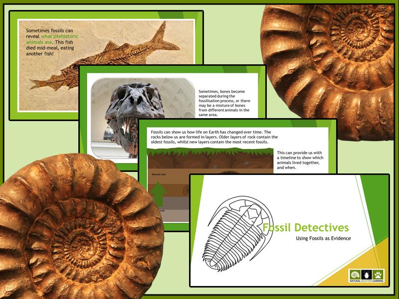 Fossils as Evidence PowerPoint Presentation, KS2