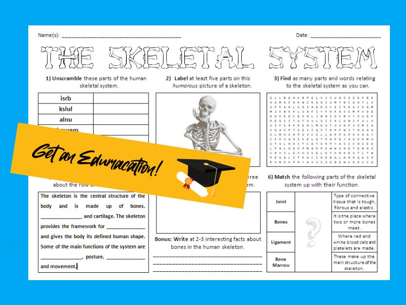 The Skeletal System - Large Activity Sheet