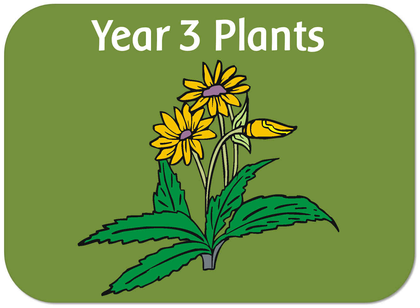 Image result for year 3 science plants