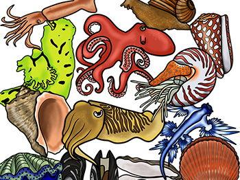 Mollusks Clip Art Bundle