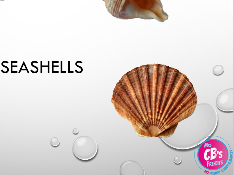 Sea shells powerpoint - full of seashell images and a variety of open ended, cross circular tasks