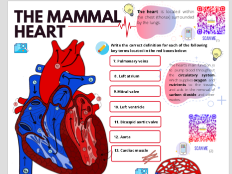 The Mammal Heart Activity Booklet (Embedding ICT and Stretch and Challenge)