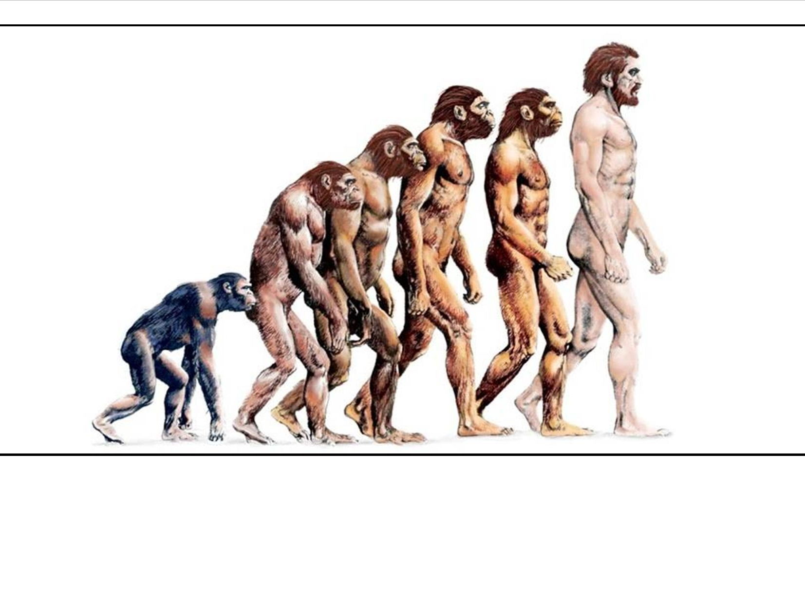 AQA GCSE Biology - Genetics & Evolution Bundle