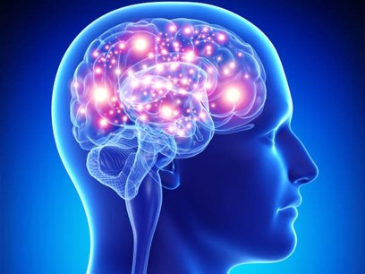 Edexcel NEW GCSE Brain and Neuropsychology Complete Topic