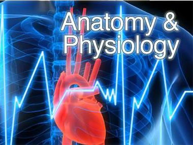 NEW GCSE PE - Applied Anatomy & Physiology - body systems