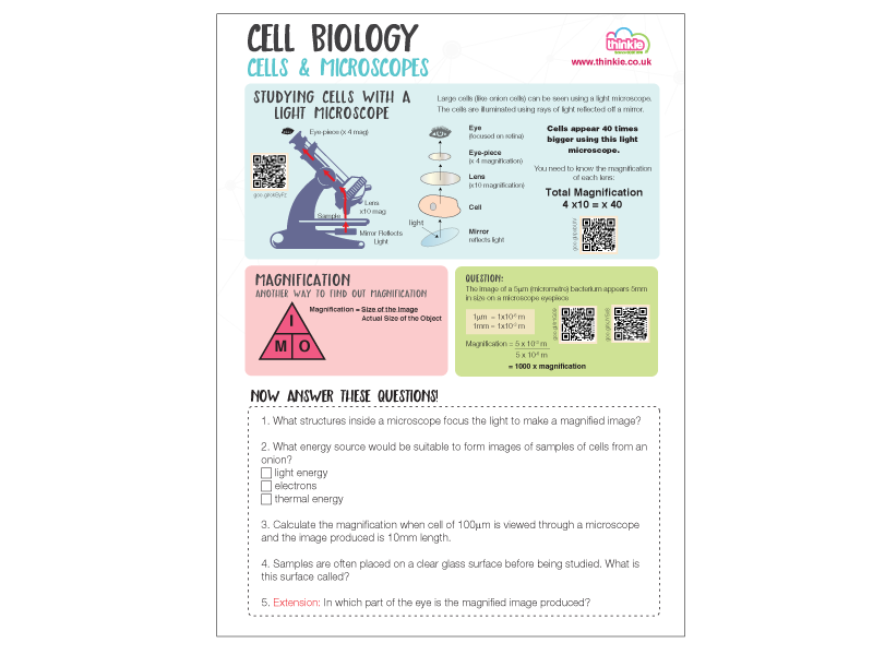 Eukaryotes and Prokaryotes Worksheet Biology GCSE 2016 by – Prokaryotes Vs Eukaryotes Worksheet