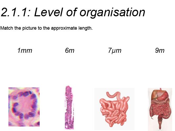 AQA GCSE Biology: Trilogy. Lesson 13 Organisation